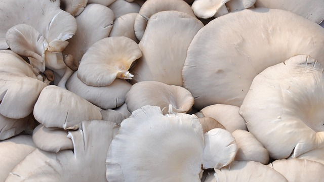 Mushrooms Provide Vitamins