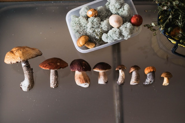 Mushrooms Provide Antioxidants