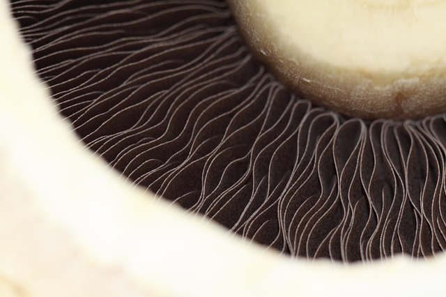 Benefits of Fungi Consumption - Part 1